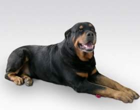 Как обрезать когти собаке фото