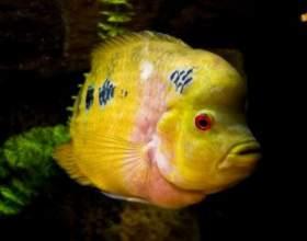 Как очистить аквариум фото