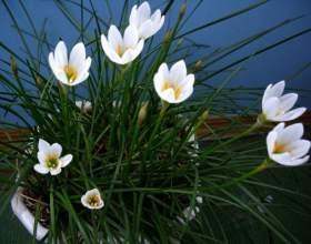 Как определить название комнатного растения фото