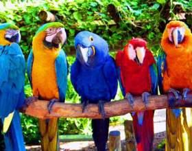 Как определить самца попугая фото