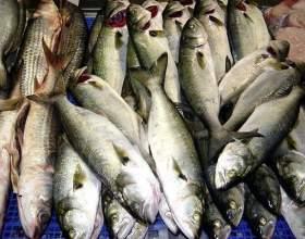 Как определить свежую рыбу фото