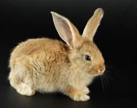 Как отличить пол кролика фото