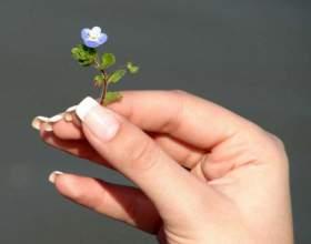 Как отрастить быстро длинные ногти фото