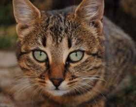 Как отучить кошку метить фото