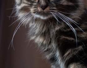 Как отучить кота драть фото
