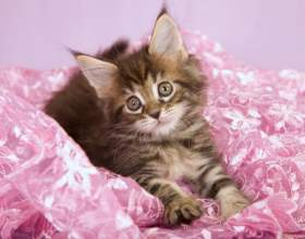 Как отучить котенка царапаться фото