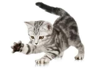 Как отучить котенка кусаться и царапаться фото
