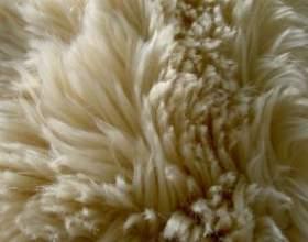 Как почистить белый мех в домашних условиях фото