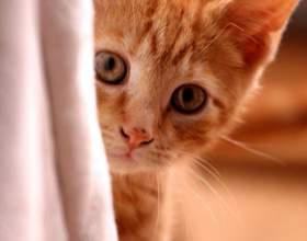 Как чистить уши котенку фото