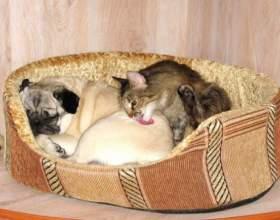 Как подружить котенка с собакой фото