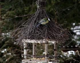 Как помочь птицам фото