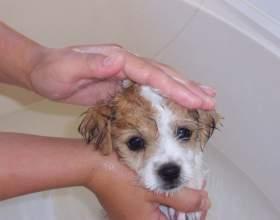 Как помыть щенка фото