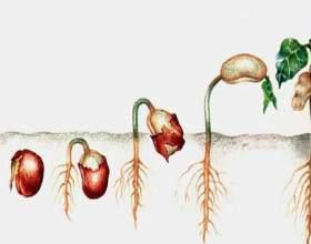 Как посадить семена фото