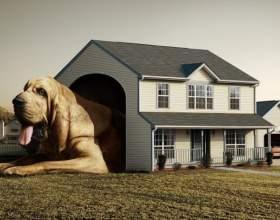 Как сделать дом для собаки фото