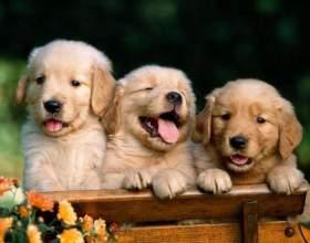 Как придумать кличку собаке фото