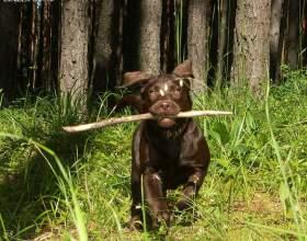 Как приучать щенка к командам фото