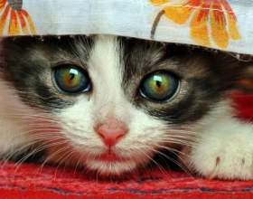 Как приучить кошку к рукам фото