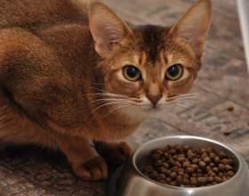 Как приучить кота есть сухой корм фото