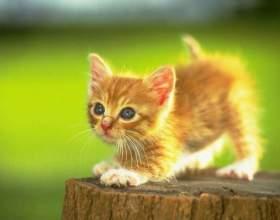 Как приучить кота к еде фото