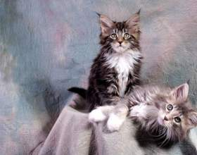 Как приучить котёнка к его месту фото