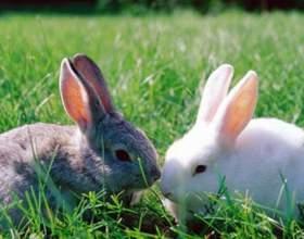 Как разводить домашних кроликов фото