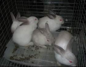 Как разводить кроликов в домашних условиях фото