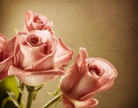 Как сделать, чтобы розы дольше стояли фото