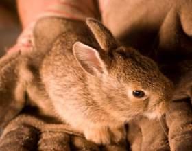 Как сделать домик для кролика фото