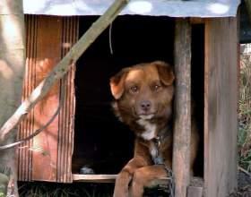 Как сделать домик для собачки фото