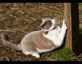 Как сделать когтеточку для кошки фото