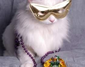 Как сделать костюм кота фото