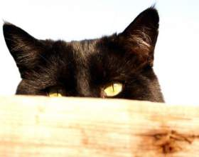 Как сделать ободок с кошачьими ушками фото