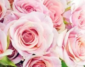 Как сохранить букет роз свежим фото