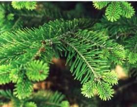 Как сохранить елку зеленой фото