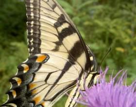 Как сохранить красоту природы фото