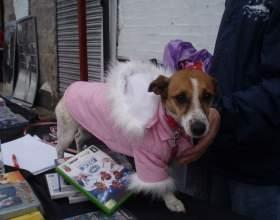 Как сшить костюм для собаки фото