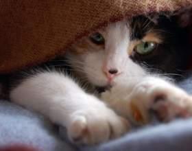 Как стричь когти котенку фото