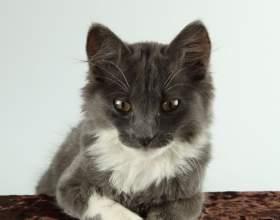 Как подстричь когти коту фото