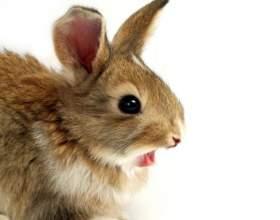 Как стричь кролика фото