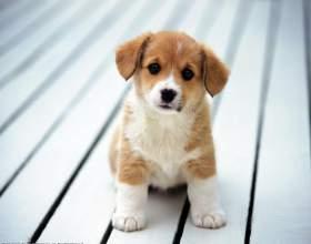 Как уговорить маму завести собаку фото