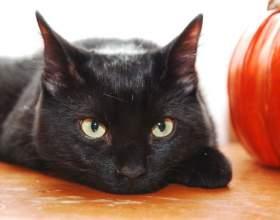 Как узнать породу кошки фото