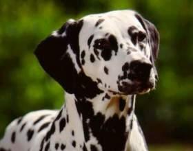 Как восстановить родословную на собаку фото