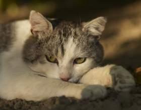Как вылечить кошку от простуды фото