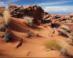 Как выжить в пустыне фото
