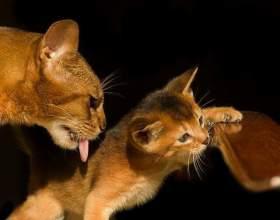 Какие прививки нужно делать кошкам фото