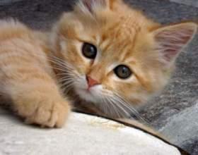 Почему тошнит котенка фото