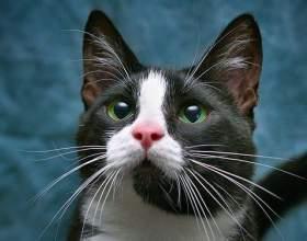 Зачем коту усы фото