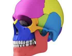 Строение костей черепа фото
