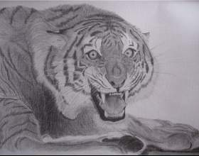 Тигр карандашом: как нарисовать красиво фото
