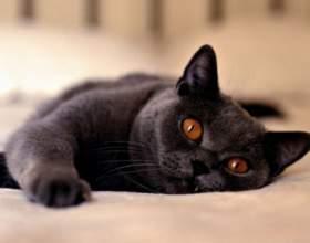 У кошки гноятся глаза: что делать фото